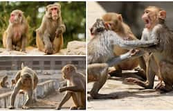 <p>monkey india&nbsp;</p>