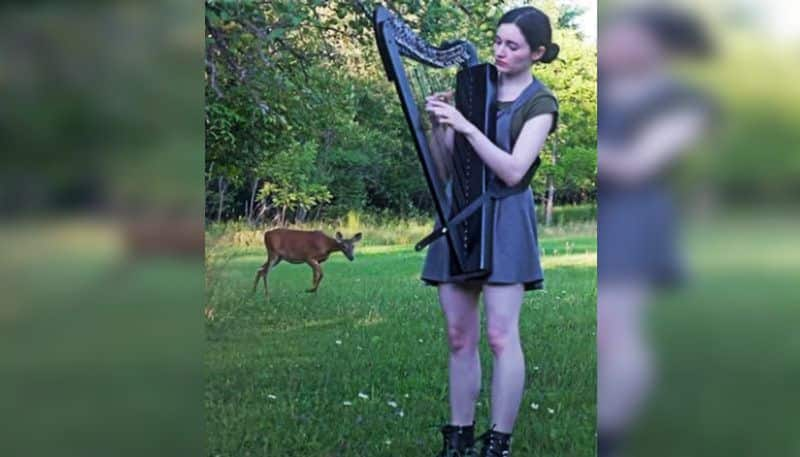 video of a deer stops by to listen to a woman playing harp, goes viral ALB
