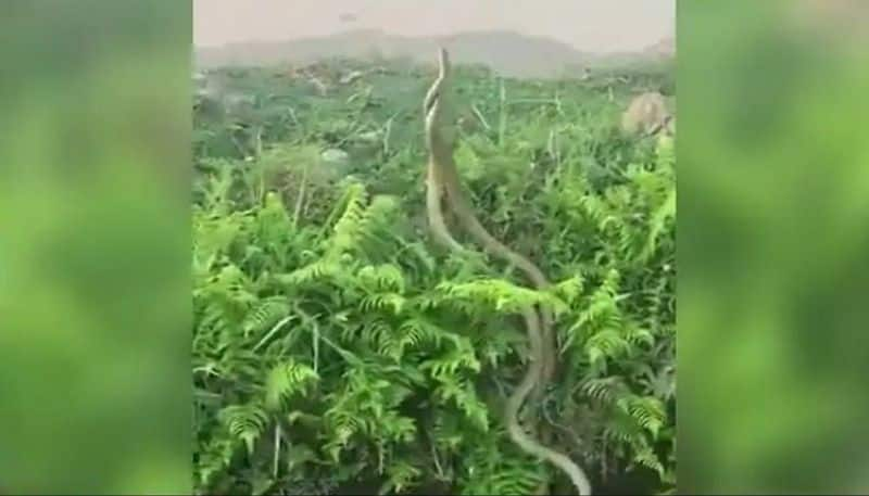 Two Huge Snakes Fight It Out In This Hair-Raising Video