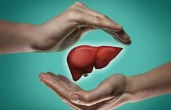 <p>liver</p>