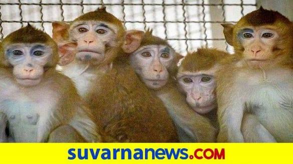 Home Guard Staff Provide Fruit to Monkeys at Hampi in Vijayanagara grg