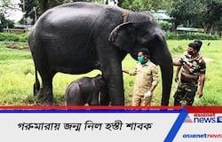 <p>গরুমারায় জন্ম নিল হস্তী শাবক</p>