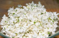 <p>Garden food: 7 flowers you didn't know you can eat</p>