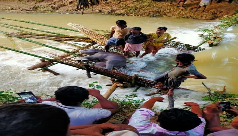 Elephant cubs body recovered from river at Midnapore ASB