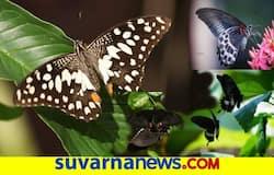 <p>Butterfly&nbsp;</p>