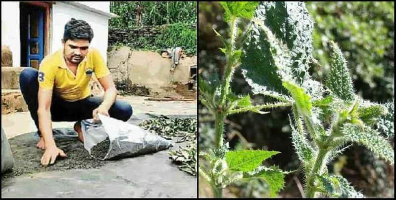 Herbal tea made scorpion grass in Corona crisis, now Dan Singh is earning millions by leaving Delhi Metro job