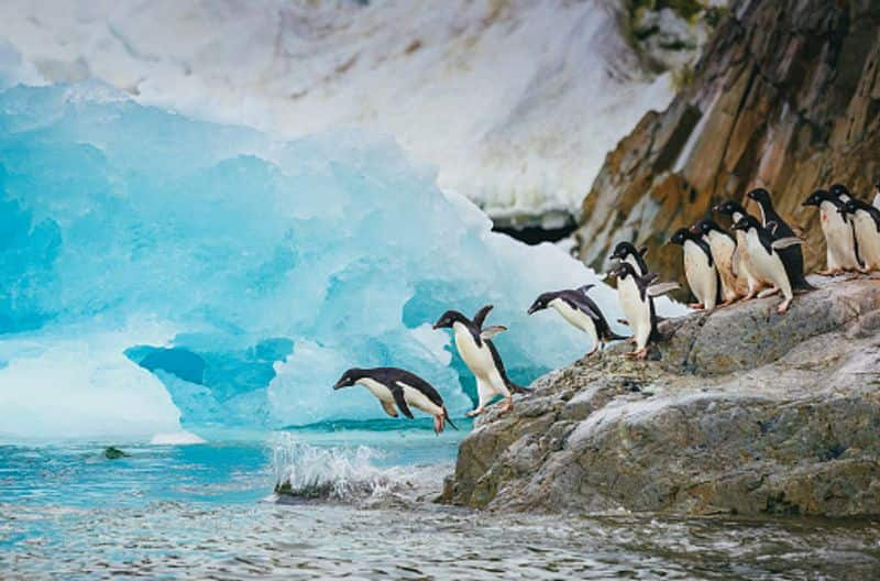 Climate crisis: 5 thousand year-old penguin graveyard revealed by retreating Antarctic ice dpl
