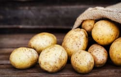 <p>Potatoes are one of the most popular vegetables, both in India and worldwide. All thanks to potatoes, we have our beloved French fries, which is one of the human race's favorite dishes. Although this dish is not as healthy as it should be, many other dishes with potatoes as ingredients are much healthier.</p>