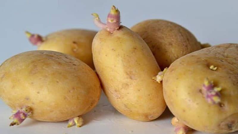 <p>ಹಸಿರು ಆಲೂಗಡ್ಡೆ ಗ್ಲೈಕೋಸೈಡ್ಸ್ ಎಂಬ ವಿಷಕಾರಿ ವಸ್ತುವನ್ನು ಹೊಂದಿರುತ್ತದೆ. ಇದು ಹೊಟ್ಟೆ ಮತ್ತು ತಲೆನೋವು, ವಾಕರಿಕೆ, ಅತಿಸಾರ, ವಾಂತಿ ಮುಂತಾದ ಸಮಸ್ಯೆಗಳನ್ನು ಉಂಟುಮಾಡಬಹುದು.</p>