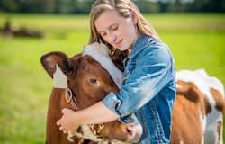 <p>cow hugging&nbsp;</p>
