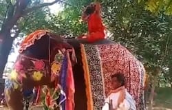 <p>Baba Ramdev falls off elephant while performing yoga, video goes viral&nbsp;</p>