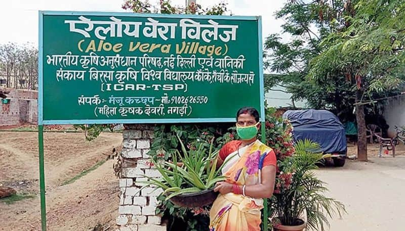 Welcome to Aloe Vera village, where medicinal plants are grown, giving farmers rich profits