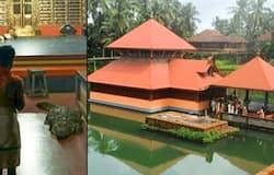 <p>Giant crocodile enters Kerala temple, photos go viral</p>
