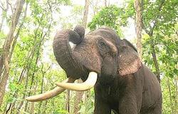 <p>Elephant Ranga&nbsp;</p>