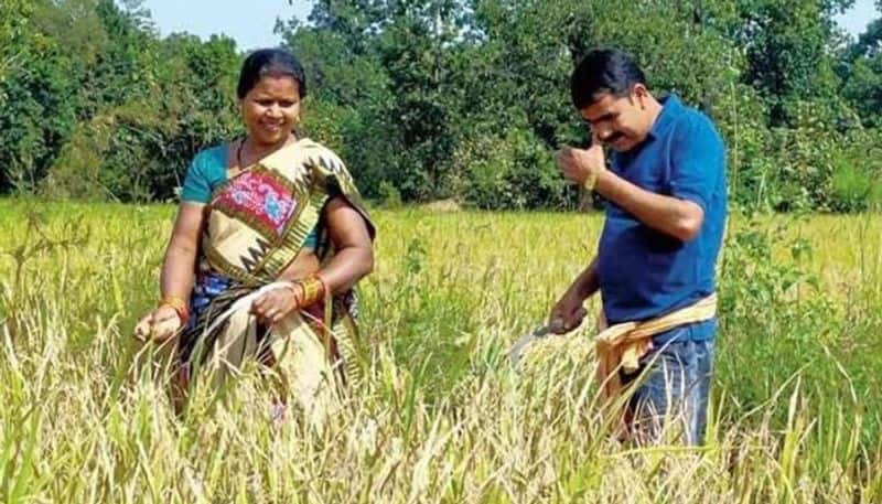 Politician like no other! Odisha MLA Nityananda Gond spends most of his time harvesting paddy, vegetables