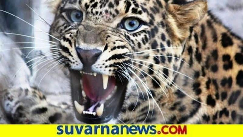 Still Operation is Going on for Leopard in Apartment in Bengaluru grg