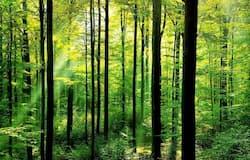 <p>chennai forest&nbsp;</p>