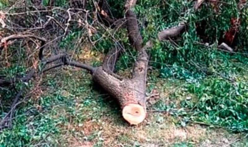Forest dept slaps Rs 20 lakh on real estate firm for felling trees lns