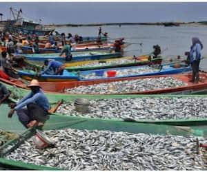 Post of Assistant in Kerala Fishermen's Welfare Fund Board Head Office