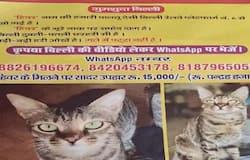 <p><strong>गोरखपुर (Uttar Pradesh) । </strong>नेपाल की पूर्व चुनाव आयुक्त इला शर्मा की बिल्ली 'हिवर' का 28 दिन बाद भी सुराग नहीं लग पाया है। इस बीच उन्होंने ईनामी राशि 11 हजार से बढ़ाकर 15 हजार रुपए कर दी है। बता दें कि &nbsp;दिल्ली जाते समय गोरखपुर के प्लेटफार्म नंबर 6 से उनकी बिल्ली गायब हो गई थी। जिसके बाद से जीआरपी व आरपीएफ की टीम तलाश कर रही है।</p>