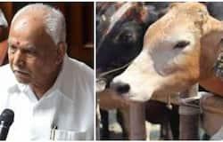 <p>anti cow slaughter bill</p>