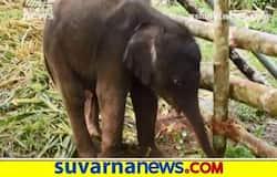 <p>Baby Elephant</p>