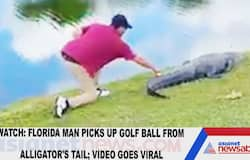 Watch: Florida man picks up golf ball from alligator's tail; video goes viral