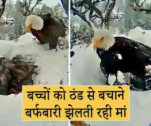 A mother bird took risk to protect children from snowfall kpa