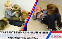 Watch: Kid playing with puppies leaves netizens overjoyed; video goes viral