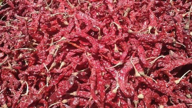 Poor Seed Marketing Network in the Name of Byadagi Breed in Hubballi grg