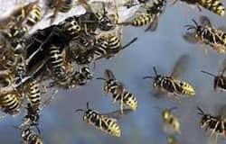 <p>bee</p>