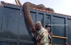 <p>forest department officer cries after elephant death</p>