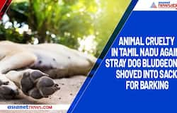Animal cruelty in Tamil Nadu again, stray dog bludgeoned, shoved into sack for barking
