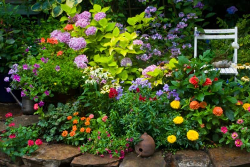 Seven things you should not do in your garden