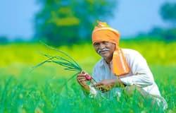 <p><strong>&nbsp;कृषि विभाग के अधिकारियों के साथ पूरा प्लान तैयार</strong><br /> मुख्यमंत्री अशोक गहलोत ने अपने दूसरे कार्यकाल में राज्य में 'किसान उपहार योजना' की शुरुआत की थी, लेकिन सत्ता परिवर्तन होने पर पिछली वसुंधरा सरकार ने इस योजना को ठंडे बस्ते में डाल दिया था। मोदी सरकार के खिलाफ देशभर के किसान एकजुट हैं इसी को लेकर वह अपने राज्य के किसानों को ह तोहफा देने जा रहे हैं। जिसके तहत उन्होंने कृषि विभाग के अधिकारियों ने योजना का पूरा खाका तैयार कर लिया है।</p>