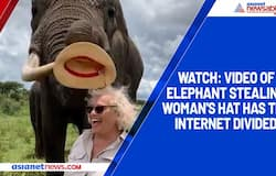 Video of elephant stealing woman's hat has the internet divided