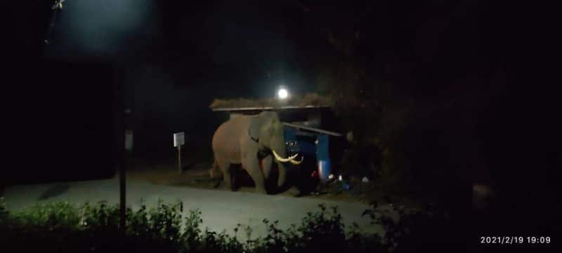 wild elephant attack autorickshaw in idukki munnar