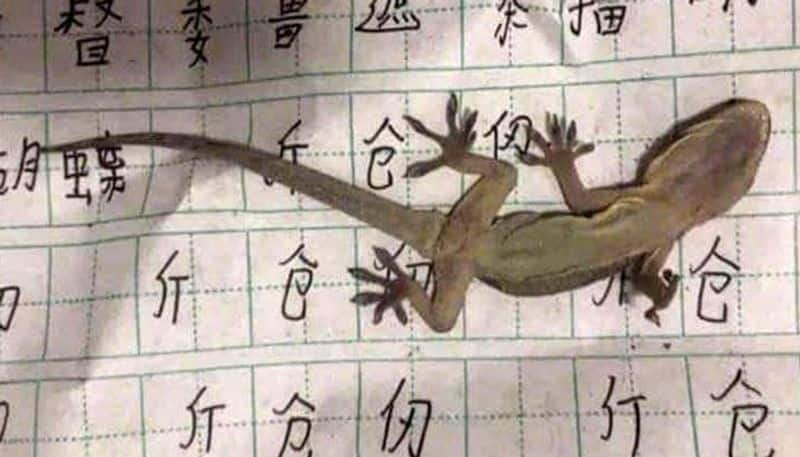 Heres what happened when a boy falls asleep on lizard while completing homework (Check out) - gps