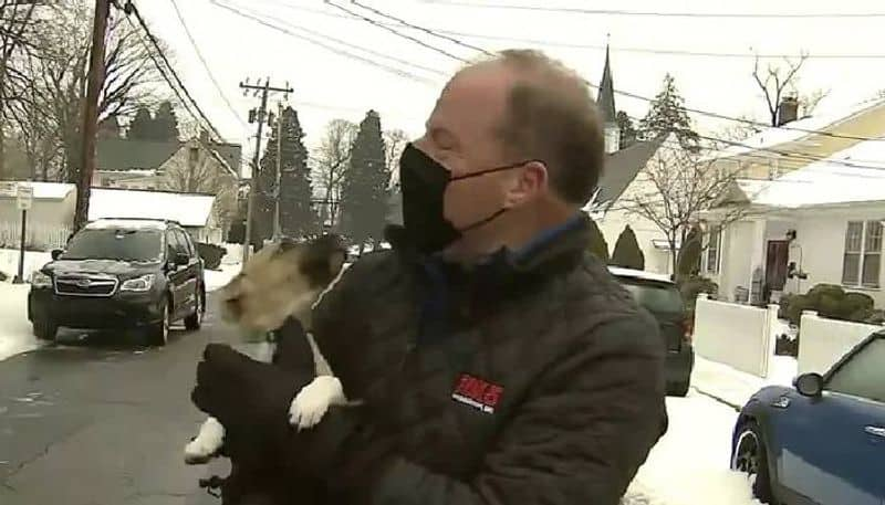 Puppy Crashes Weather Report On Live TV