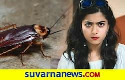 <p>Rashmika Mandanna</p>