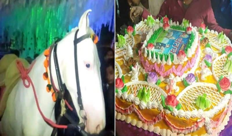 Man Celebrated Birthday To his Pet Horse in Bihar