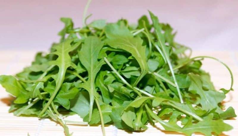 how to grow arugula hydroponically