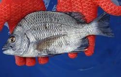 <p>fish</p>
