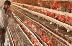 <p>Bird Flu, Bird Flu in Ahmedabad</p>