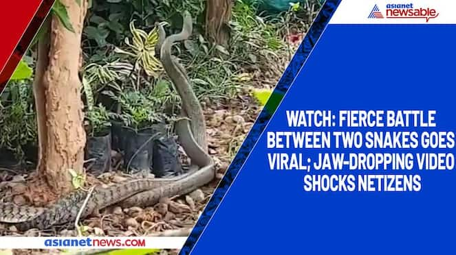 Watch Fierce battle between two snakes goes viral; jaw-dropping video shocks netizens-tgy