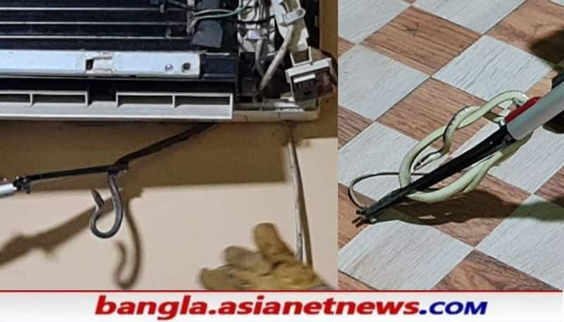 Many snakes are found in AC machine at  Bisnupurs House  RTB