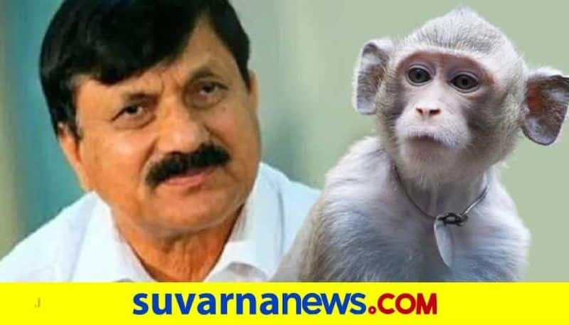 What action has been taken by the government to stop the monkeys questions MLA araga jnanendra mah