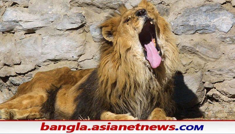 Lions tries to kill a man at  Alipore Zoo in Kolkata RTB