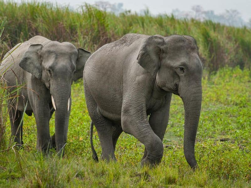 Heres how project RE HAB has helped drive away elephants, without causing harm preventing crop losses