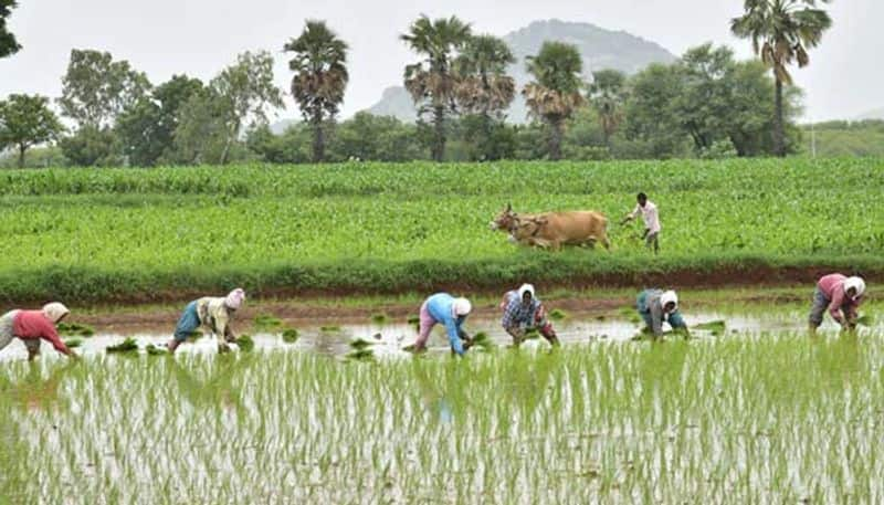 Farm labourers given drugs to work longer in punjab snr